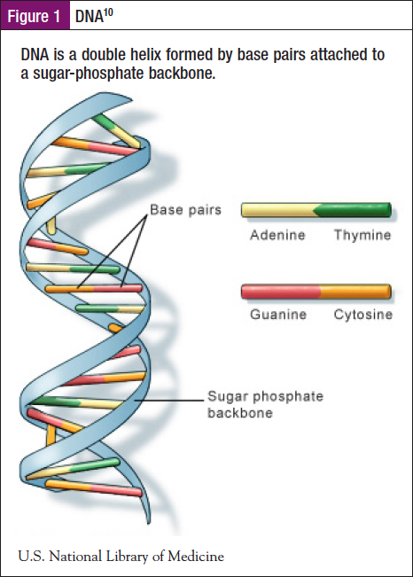 Fundamentals Of Genetics And Genomics In Oncology Nursing Practice And Navigation